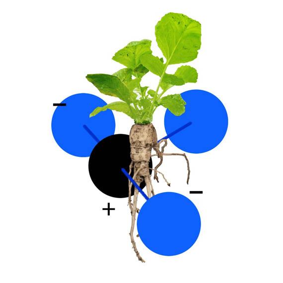 Modelar-Madre-Naturaleza-alimentar-ciudadanía-reduccion-emisiones-carbono_IBM-5-in-5