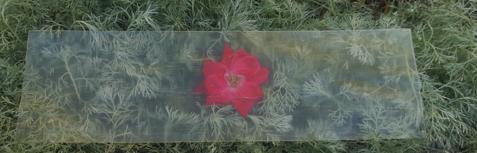 madera-transparente
