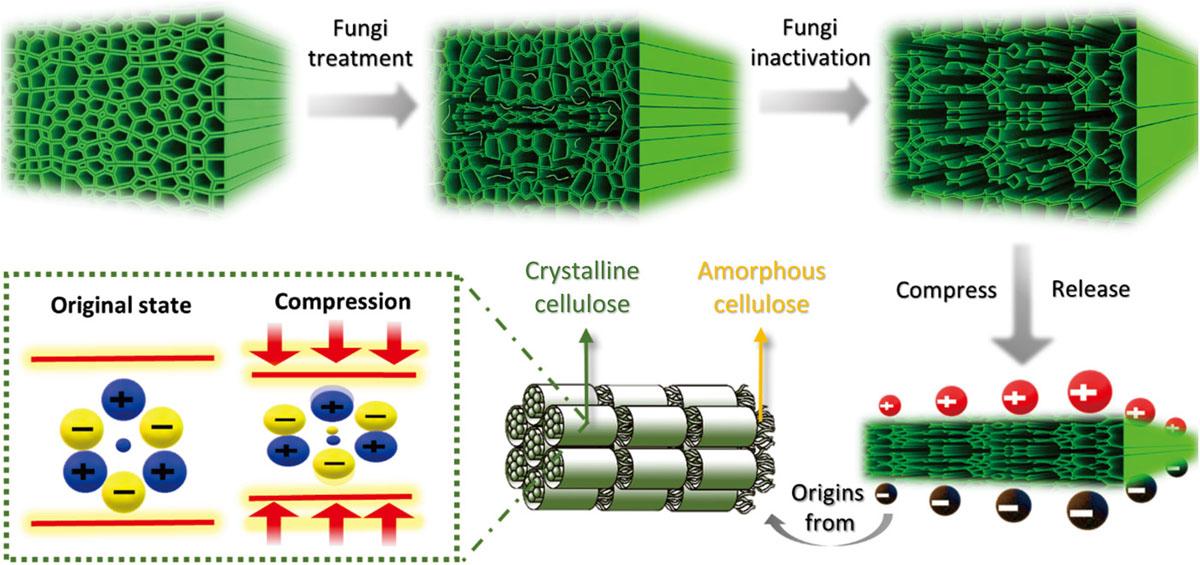 evolucion-estructura-madera-despues-tratamiento-fungico
