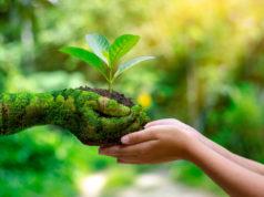 manos-planta-naturaleza-sostenibilidad
