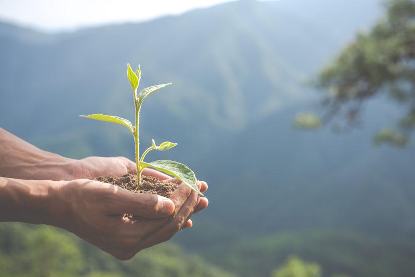 manos-planta