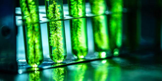 biocombustible-algas-2