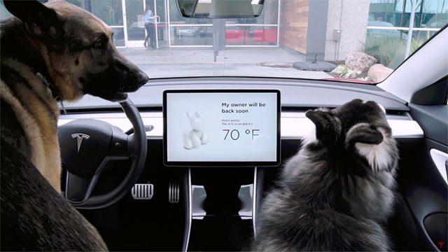 Modo Perro en Tesla
